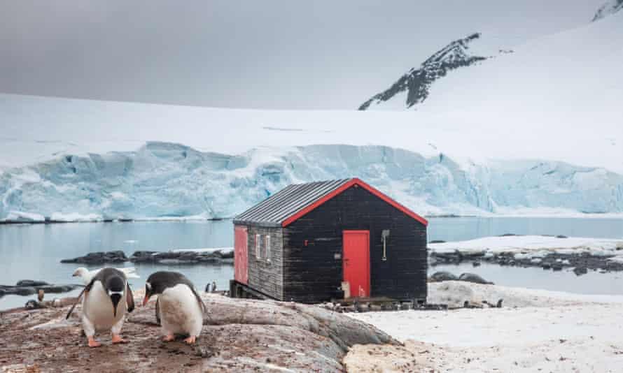 Gentoo penguins congregate at the Port Lockroy pos office in Antarctica.
