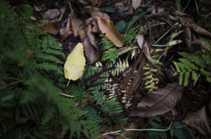 Ferns and fallen leaves in London