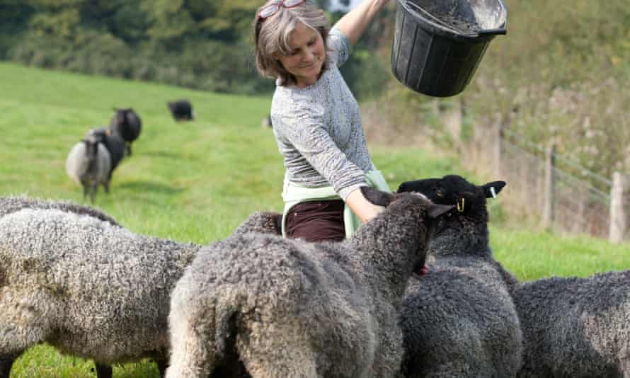 A farmer and her sheep