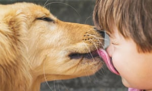 Dog licking a boy's face