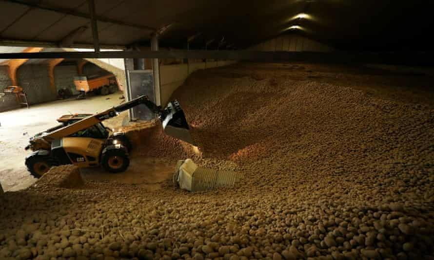 یک کشاورز در میان سیب زمینی سیب زمینی کار می کند ، بسیاری از آنها پس از بسته شدن رستوران ها و مرزها به دلیل ویروس کرونا ، در نزدیکی شهر موسکرون ، فروخته نشده اند.