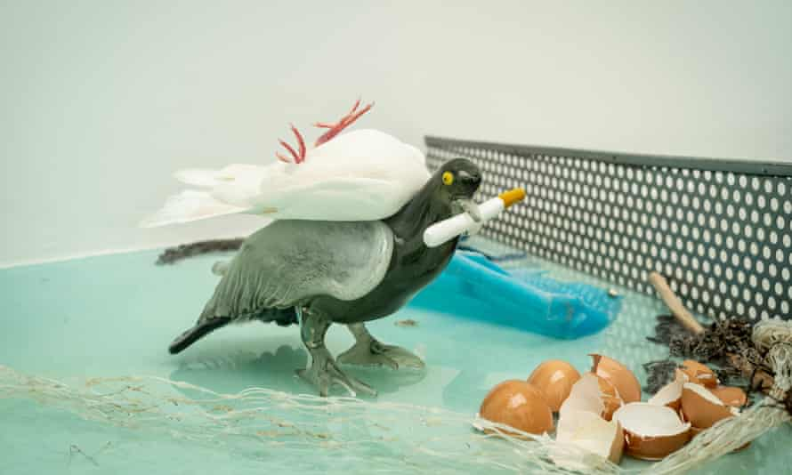 Watch the birdies … a dove on top of a model pigeon in Laure Prouvost's installation at the French pavilion.