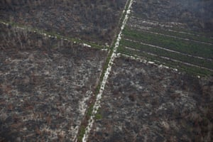 Devastated forest from the air