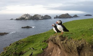 Puffin numbers on Shetland have fallen from 33,000 in early spring 2000 to 570 last year.