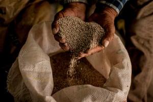 Hands holding quinoa grain