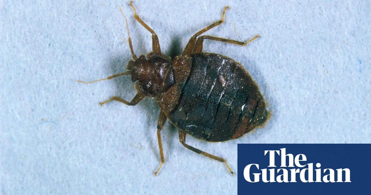 Paris launches emergency bed bugs hotline
