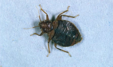 The teen lit a match after dousing a bed bug with alcohol.