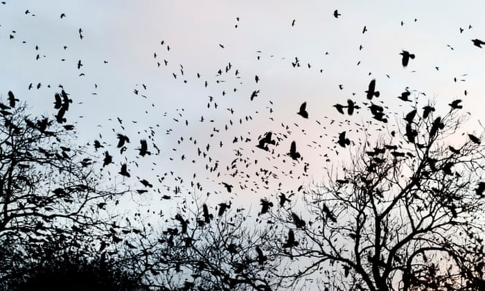 A murder of crows: Chris Packham and the countryside war over bird ...