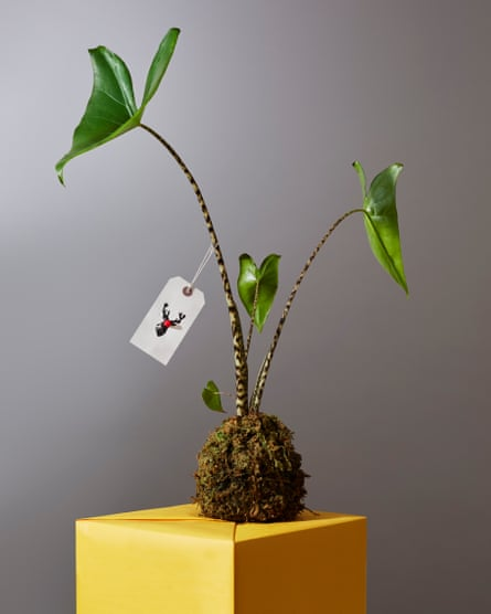 Elephant ear plant: Patch Plants . Christmas tags: Maggie Murphy.