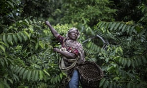 Fatima Saidi, 45, reaches out for ylang-ylang flowers on the slopes of the Karthala volcano in the Comoros, where she and other members of her family grow the flowers whose distilled oil is used as a base in the perfume industry.