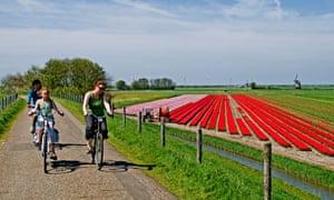 Ολλανδία βόρεια ολλανδία ολλανδικές τουλίπες bulbfields λουλούδια ποδήλατο άνθρωποι