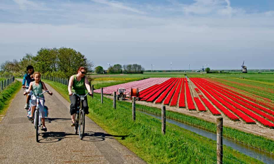 netherlands north holland dutch tulips bulbfields flowers  bike people