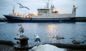 A birds flies near fishing trawlers sitting in the dock at Peterhead Fish Market and Port, UK