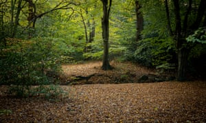 Epping Forest. Autumn project. London. Photograph by David Levene. 28/10/18
