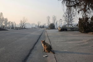 A cat seats on the street in a neighbourhood affected by fires after wildfires destroyed an area of Phoenix, Oregon, U.S., September 10, 2020.