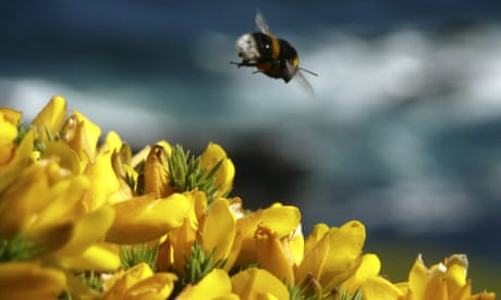 Total ban on bee-harming pesticides likely after major new EU analysis