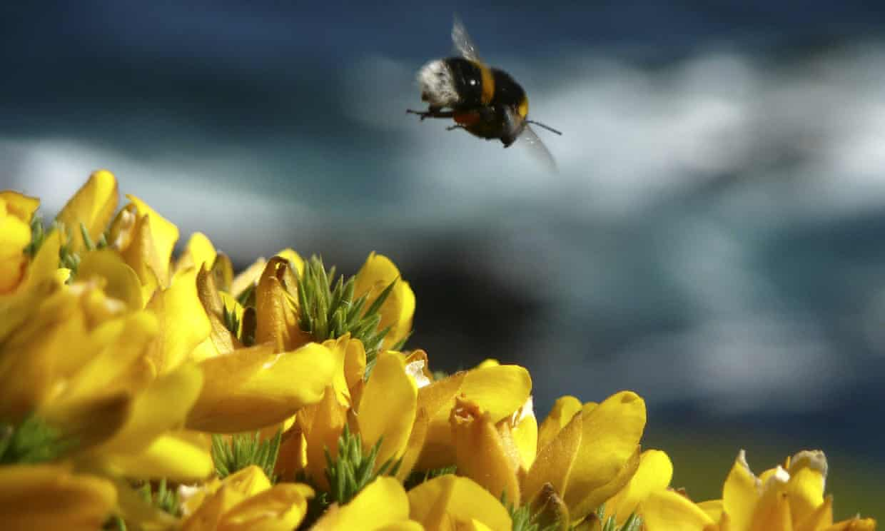 Neonicotinoids, which are nerve agents, have been shown to cause a wide range of harm to bees.