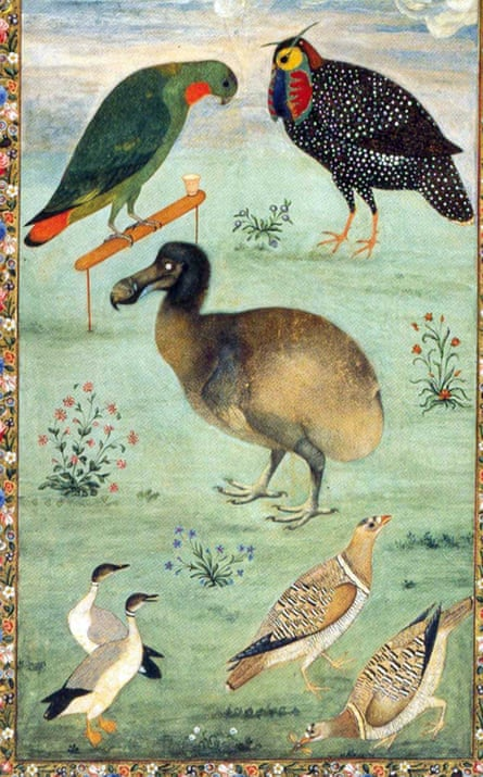 Painting of a dodo, centre, (and other birds) by the Mughal artist Ustad Mansur from circa 1625. This is one of the few colour paintings of the dodo based on a live bird.