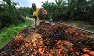 A worker loads palm oil seeds in Serba Jadi, East Aceh