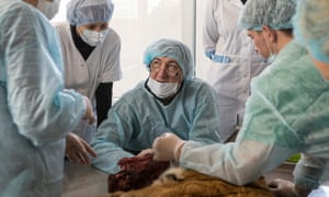 Pavel Fomenko watched by students at the Ussurysk Diagnostic Centre performs an autopsy on the tiger.