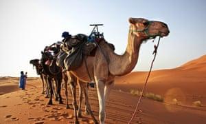 Camel train in the Sahara.