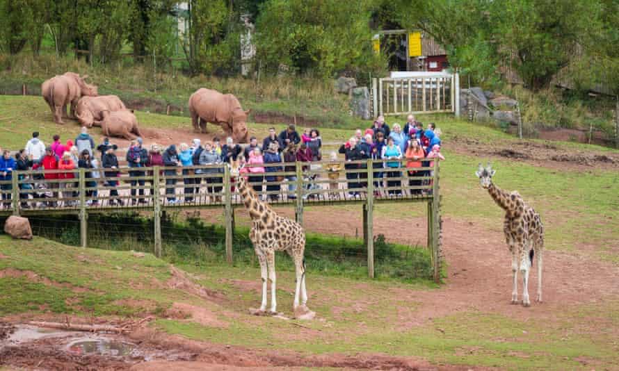 Visitors to South Lakes Safari Zoo in the giraffe enclosure
