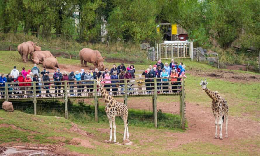 Visitors to the giraffe enclosure at South Lakes Safari zoo in Cumbria.