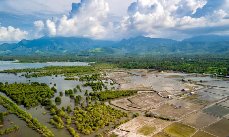 Overview of the mangrove biotope around Pemuteran coastline in north-west Bali island, Indonesia