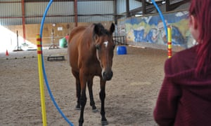 A horse looks through a large hoop to camera