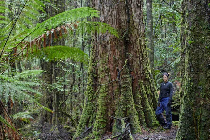 The takayna/Tarkine rainforest is the largest temperate rainforest in the southern hemisphere.
