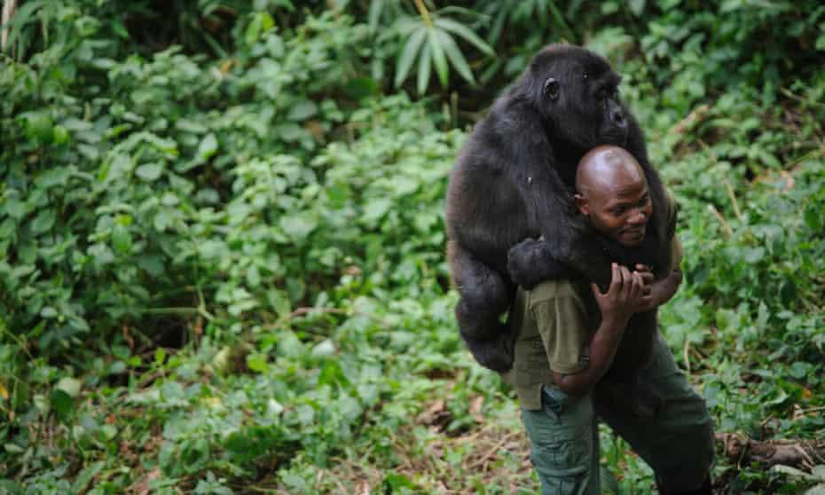 Patrick Karabaranga, a warden at the Virunga national park