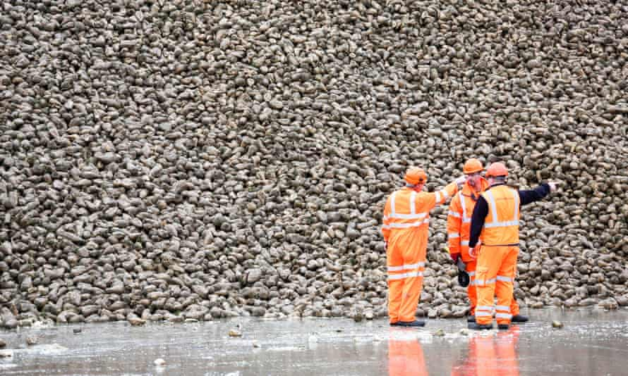 A stockpile of sugar beet at the British Sugar factory in Bury St Edmunds.