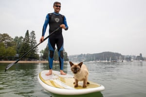 Gus the tonkingese cat enjoys activities like kayaking, stand-up paddle-boarding and swimming in the sea.