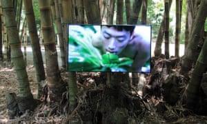 A still from Zheng Bo's video art piece Pteridophilia at Orto Botanico.