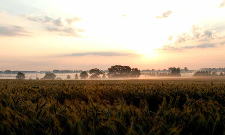 Neuruppin, sunrise over a cornfield