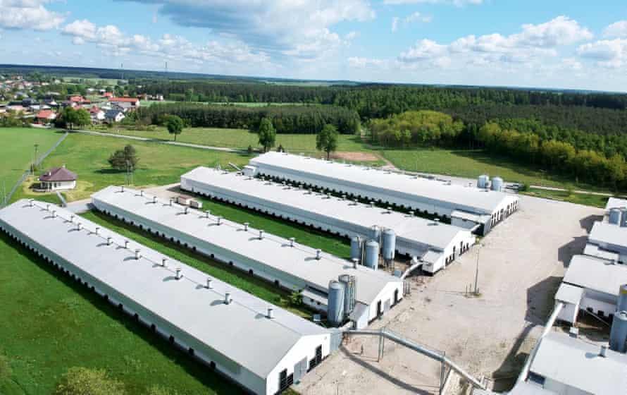 Industrial-scale chicken farm in Zielun