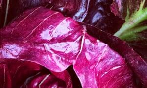 Purple reign: the last radicchio keeps on keeping on.