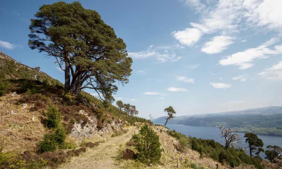 Single tree in front of Loch Ness
