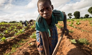 Tiyamike Phiri, 14, at work on a tobacco plot in Kasungu district, Malawi.