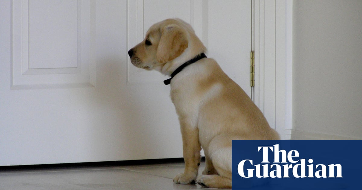 Dog gone: how to handle your pet's post-Covid separation anxiety