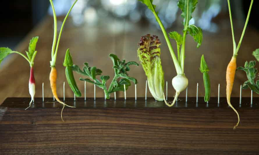Vegetables on the Fence