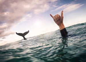 Kyle Taylor giving the shakka hand-sign just as a whale breaches behind him in Byron Bay, Australia in September 2015.
