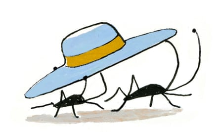Illustration of bugs carrying hat