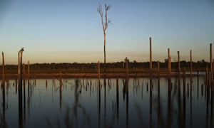 Dead trees in a deforested section of Brazil's Amazon rainforest.