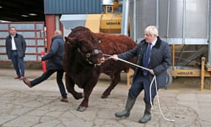Boris Johnson with a bull on  a visit to a farm in Aberdeenshire