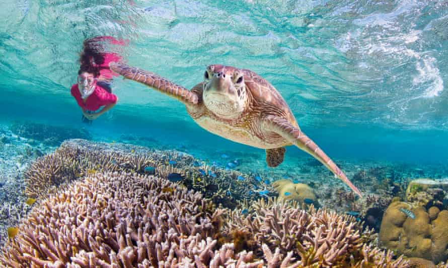 a woman and a sea turtle near Lady Elliot Island, Bundaberg