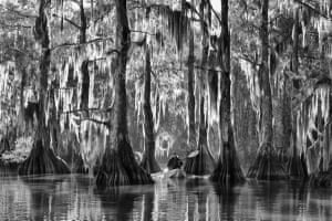 Cypress trees in the Atchafalaya Basin, Louisiana, USA; Overall Travel Photographer of the Year 2015