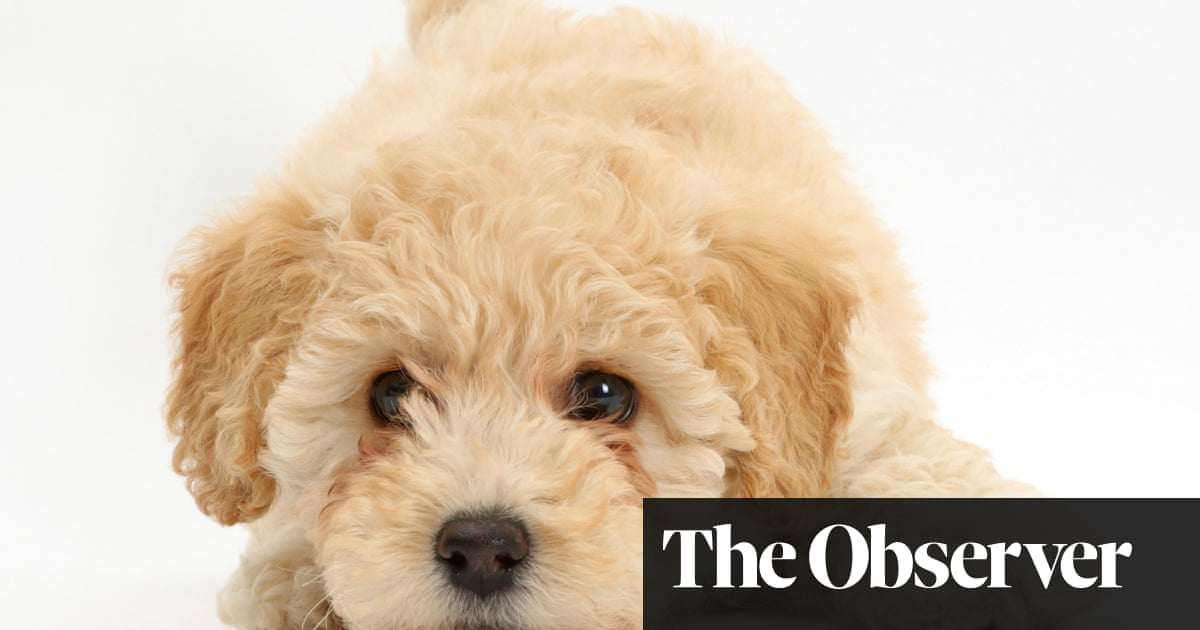 A dog is for life, not just lockdown: how to buy a healthy puppy in a pandemic