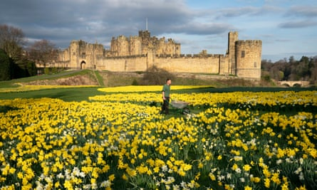 Spring weather 28th March 2019Gardner Rob Ternent, 31, pushes his wheelbarrow through a sea of daffodils at Alnwick Castle in Northumberland. PA Photo Owen Humphreys PRESS ASSOCIATION Photo. Picture date: Thursday March 28, 2019. See PA story Weather . Photo credit should read: Owen Humphreys/PA Wire