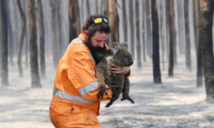Adelaide wildlife rescuer Simon Adamczyk carries an injured koala on Kangaroo Island, South Australia. Half the island's 50,000 koalas are estimated to have perished in the bushfires.